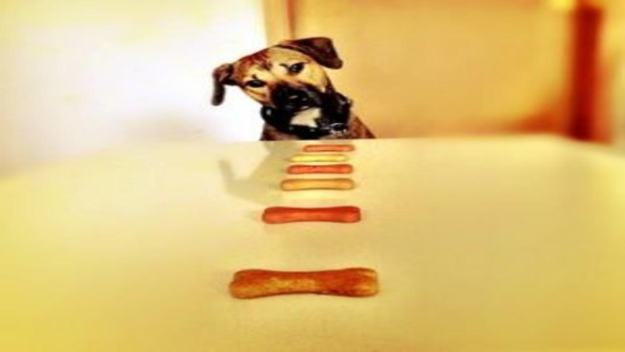 free画像,犬と骨クッキー,テーブル