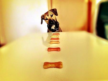 free画像,犬,食事