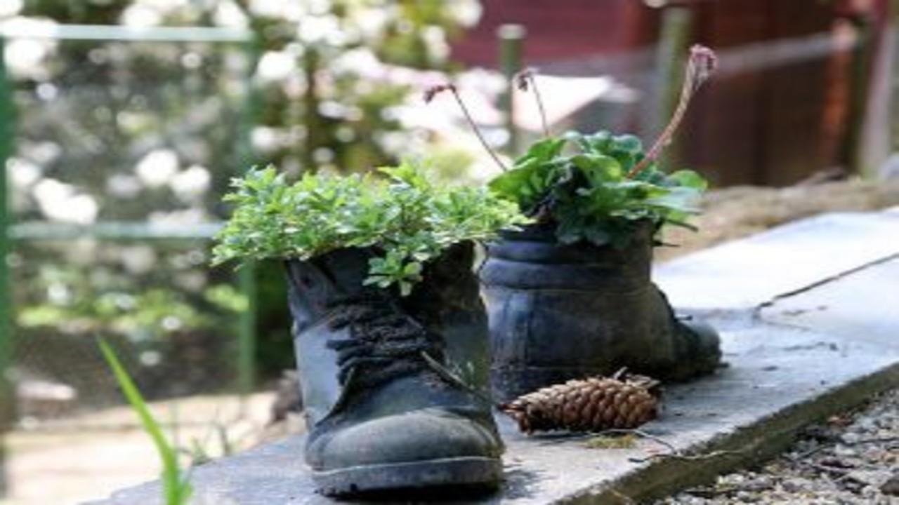 free画像,安全靴,植木,松ぼっくり