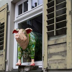 free画像,窓,豚