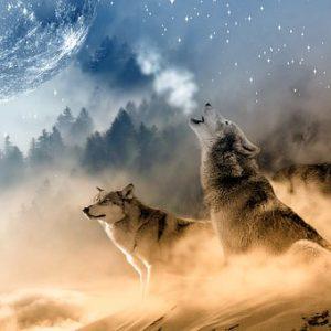 free画像,3匹オオカミ