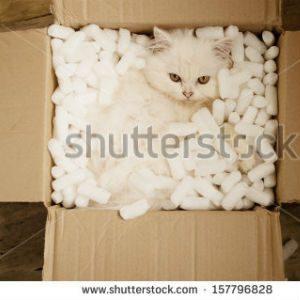free画像,段ボール,白猫