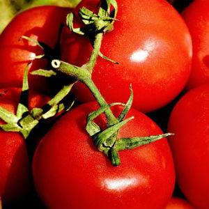 free画像,真っ赤なトマト,大玉