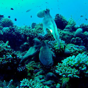 free画像,タコ,深海